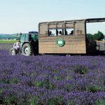 【日本】紫の絶景へ!この夏行きたいラベンダーの人気スポット7選