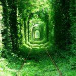 おとぎの国へ続くトンネル!?木が作り上げた美しいトンネル7選。