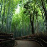 【京都】嵐山をぶらり散策。嵐山のおススメスポット5選。