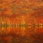 JR東日本の秋のポスター「紅葉だCOLOR!」の撮影地はここだ!