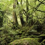 もののけ姫の舞台となった『屋久島・白谷雲水峡』の神秘的な世界。