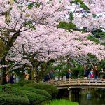 春夏秋冬訪れたい日本の名所!日本三名園の一つ『兼六園』