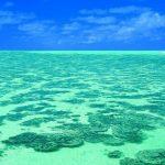 純白のパウダーサンドと青い海。美しい珊瑚の島『ヘロン島』
