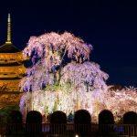 春夏秋冬訪れたい日本の名所!五重塔が象徴的な京都の『東寺』