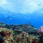マレーシアの宝の海!セレベス海の竜宮城『シパダン島』