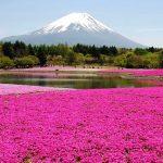 春爛漫!芝桜が創る絶景アート!芝桜の人気スポット5選。