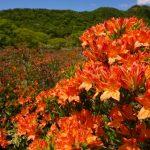 今が見頃のオレンジの絶景!赤城山を覆うレンゲツツジを見に行こう!