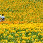 今だけの黄色い絶景を見に行こう!この夏行きたい、ひまわり畑の名所7選。