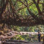 インドの秘境に架かる「生きてる橋」。500年成長し続けるその姿とは・・・