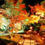 日本三景・松島の紅葉ライトアップが幻想的で素敵!