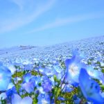 お花の絨毯に癒されよう!一度は行きたい素敵な花畑8選。