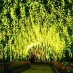 東日本最大級300万球の光の祭典!あしかがフラワーパーク『フラワーファンタジー 光の花の庭』