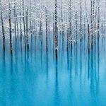 美瑛の『青い池』がライトアップで幻想的に浮かび上がる!