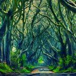 どんな世界に続いているんだろう・・・。不思議な並木道『ダークヘッジ』
