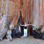 世界最大の巨木が眠る森。アメリカの『セコイア国立公園』