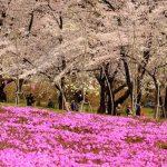 春だ!桜だ!お花見だ!今年も行きたい桜の名所【関東編】