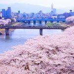 春だ!桜だ!お花見だ!今年も行きたい桜の名所【北陸・甲信越編】