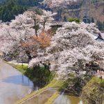春だ!桜だ!お花見だ!今年も行きたい桜の名所【東海編】