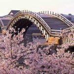 春だ!桜だ!お花見だ!今年も行きたい桜の名所【中国・四国編】