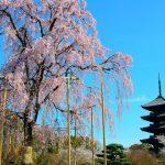 桜色に染まる京都の春!京都で行きたい桜の名所25選【第1弾】