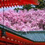 桜色に染まる京都の春!京都で行きたい桜の名所25選【第2弾】