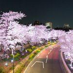 東京の桜を楽しもう!東京のお花見スポット25選【第2弾】
