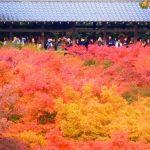 春夏秋冬訪れたい日本の名所!京都屈指の紅葉美『東福寺』