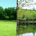 春に現れる幻の沼!知床国立公園の『ポンホロ沼 』