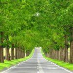 美しすぎる並木道に感動!滋賀県の『メタセコイア並木』