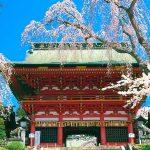 東北の桜はこれから見頃!東北のお花見の名所25選【第1弾】
