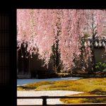 春夏秋冬訪れたい日本の名所!豊臣秀吉の妻・ねねの寺、京都『高台寺』