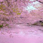 春だ!桜だ!お花見だ!桜の名所100選【まとめ】