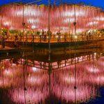 水鏡に映える藤の絶景!あしかがフラワーパークの『藤のライトアップ』