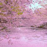 弘前観光で絶対おすすめしたい40選。弘前の魅力を徹底ガイド!
