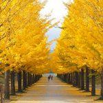 福島市観光で絶対おすすめしたい32選。福島市の魅力を徹底ガイド!