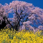 二本松の観光におすすめ31選。定番スポットから人気イベントまで!